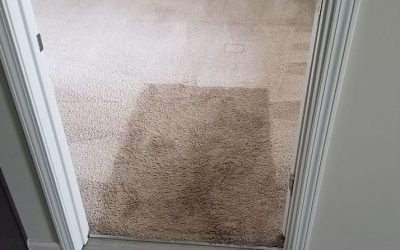 How to Remove Bleach Stains from Carpet